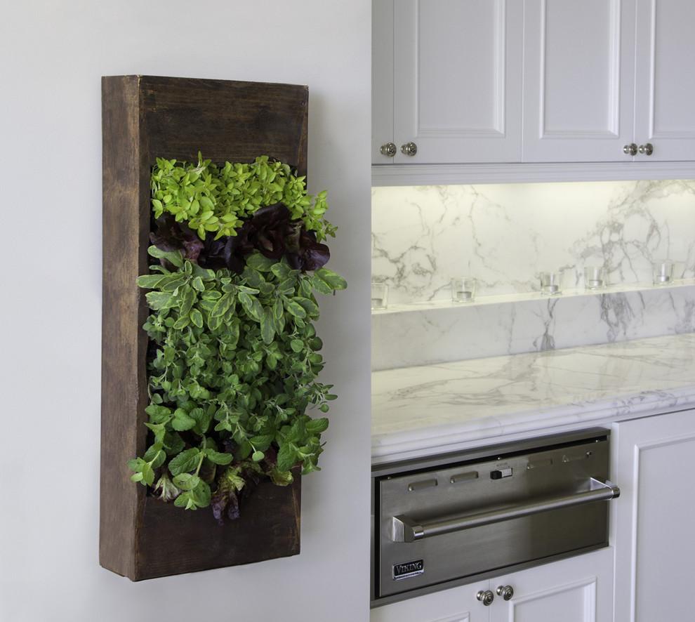 Вертикальная клумба с зелёной растительностью на стене кухни