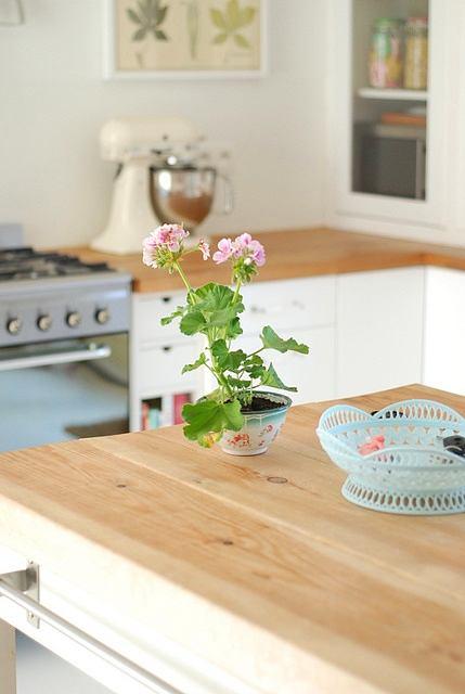 Цветок в горшке на кухне
