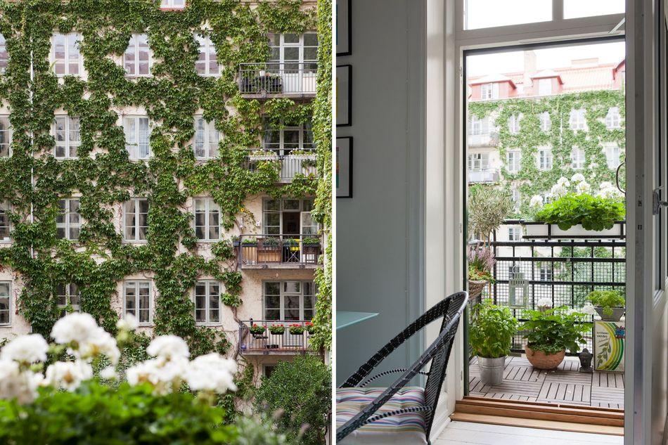 Фотоколлаж: панорамный вид с кухонного балкона на дом, увитый плющом